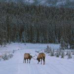 Five Ways to Watch Wildlife in Banff National Park