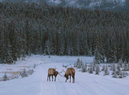 Plan your ski vacation in Banff & Lake Louise - SkiBig3