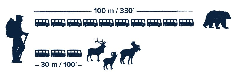 Keep 100 metres (330 feet) from bears, 30 metres (100 feet) from other wildlife.