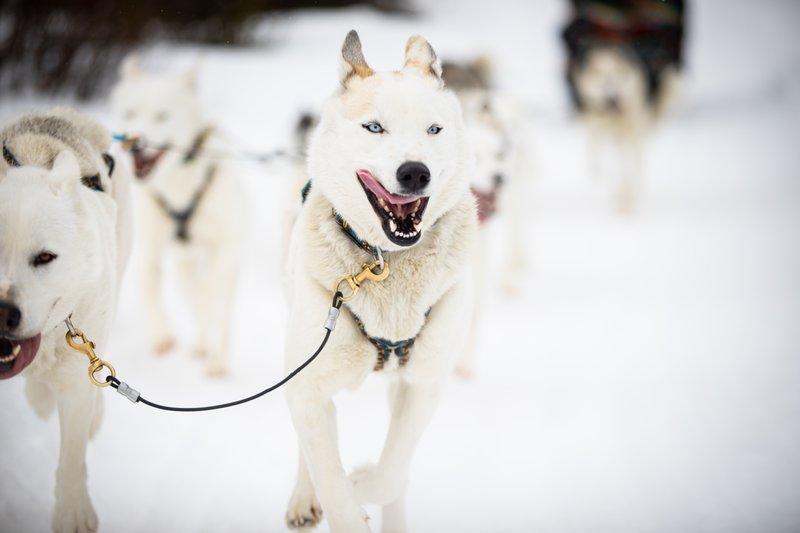 Dog Sledding, photo by Devaan Ingraham