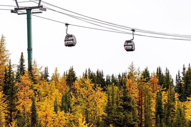 Larches at Lake Louise Ski Resort, photo by Lake Louise.